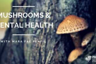 Mushrooms and mental health with Mara Fae Penfil