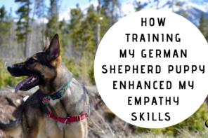How Training My German Shepherd Puppy Enhanced My Empathy Skills